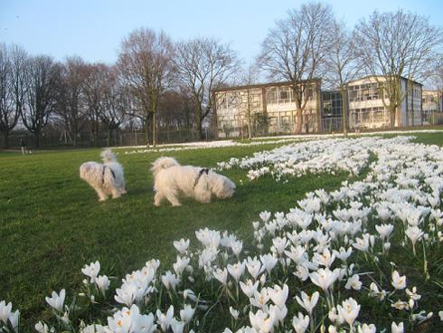 het voorjaar komt eraan
